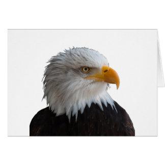Bald eagle カード
