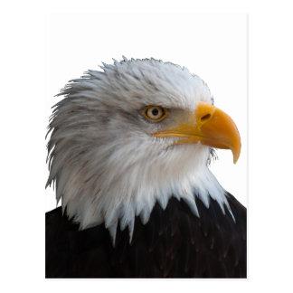 Bald eagle ポストカード