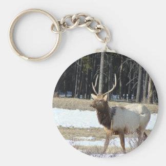 Banffのオオシカ キーホルダー