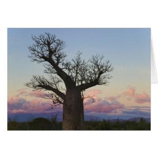 Baobabの木、Berenty、Toliara、マダガスカル カード