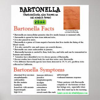Bartonella情報ファクトシートポスター ポスター