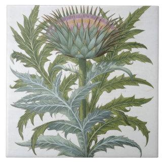 Bas著「Hortus Eystettensis」からのCardoon、 タイル