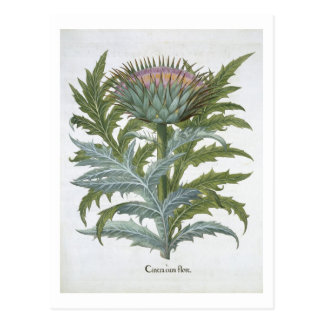 Bas著「Hortus Eystettensis」からのCardoon、 ポストカード