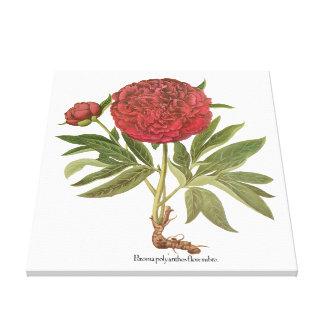 Basilius Besler著ヴィンテージのシャクヤクのシャクヤクの花 キャンバスプリント