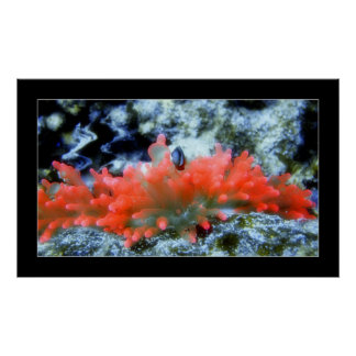 beautifierフィルター効果の赤いネオンアネモネ ポスター