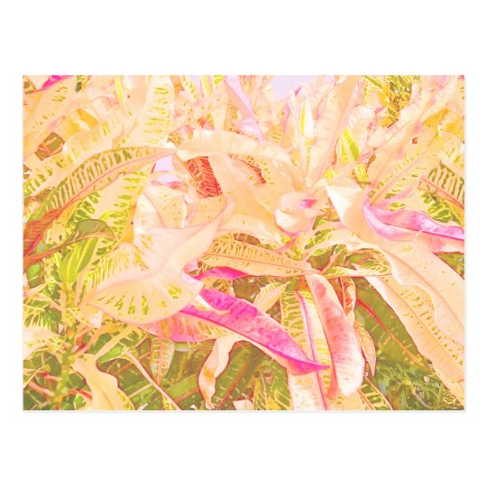 Beautiful croton leaves (1) ポストカード