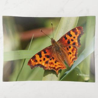 Beautiful Orange Satyr Comma Butterfly トリンケットトレー