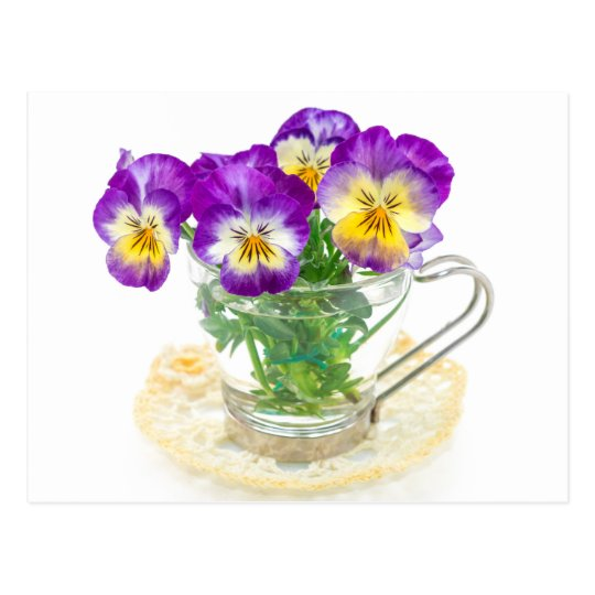 beautiful pansy flowers isolated in a cup ポストカード