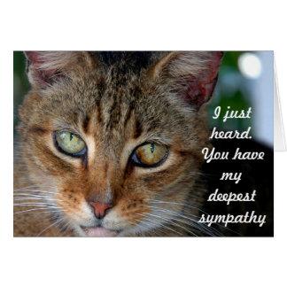 Belated cat sympathy カード