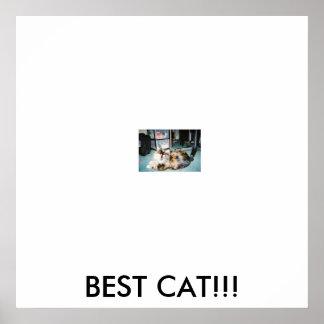 bellanew3、ベストCAT!!! ポスター
