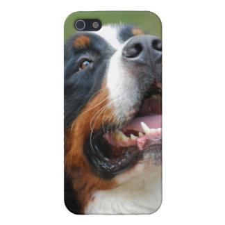 Berner Sennenhund iPhone 5 Case