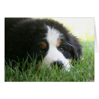 Berneseの子犬 カード