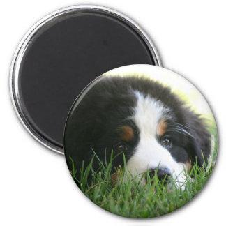 Berneseの子犬 マグネット