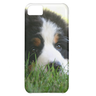 Berneseの子犬 iPhone5Cケース