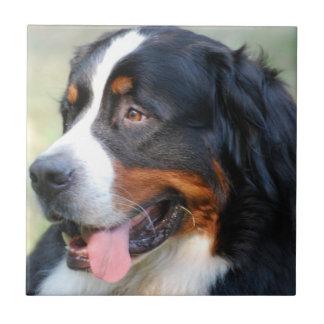 Bernese山の子犬のタイル タイル