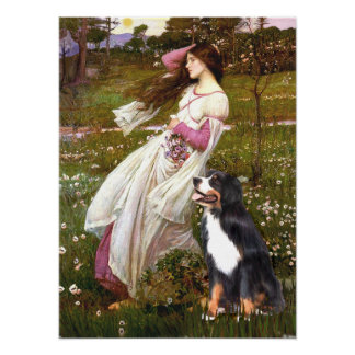 Bernese - WIndflowers ポスター