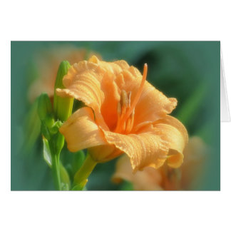 Bertie Blooms - Daylily カード