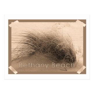 Bethanyの草の郵便はがき ポストカード