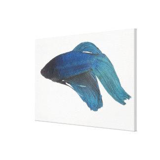 Bettaの魚かオスの青いシャムの戦いの魚 キャンバスプリント