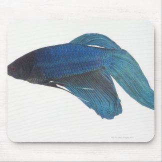 Bettaの魚かオスの青いシャムの戦いの魚 マウスパッド
