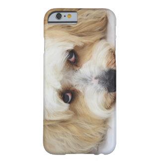 bichonのfrise犬のユーモアのあるなクローズアップ barely there iPhone 6 ケース