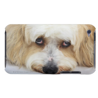 bichonのfrise犬のユーモアのあるなクローズアップ Case-Mate iPod touch ケース