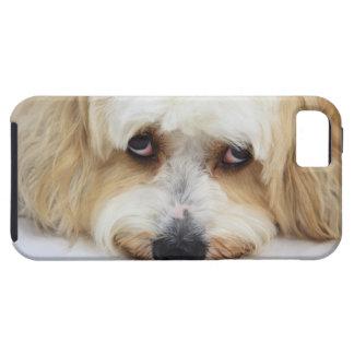 bichonのfrise犬のユーモアのあるなクローズアップ iPhone SE/5/5s ケース