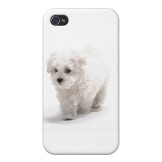 Bichon Friseのiphone 4ケース iPhone 4/4Sケース