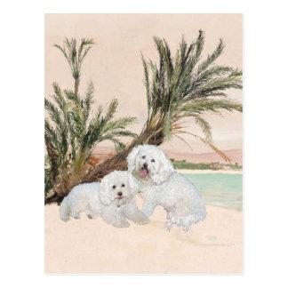 Bichon FriseのPalmyビーチ ポストカード