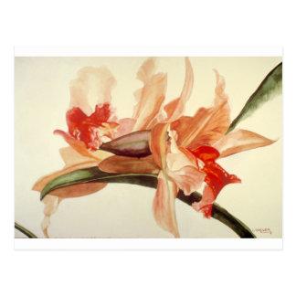 Big_Flower.png ポストカード