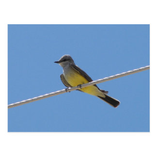 Bird王 ポストカード