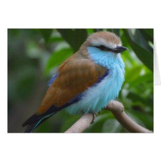 bird-2_jon_sullivan カード