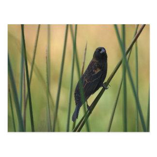 bird-9_jon_sullivan ポストカード
