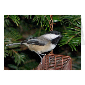 Birdfeederの鳥 カード