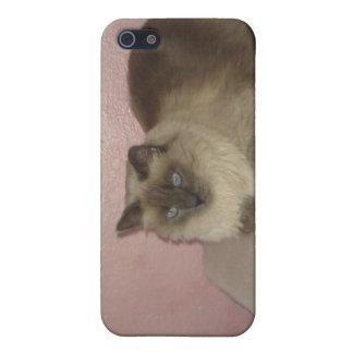 Birmanの組合せ猫 iPhone SE/5/5sケース