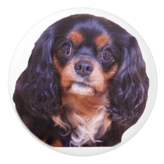 Black And Tan Cavalier King Charles Spaniel Knob セラミックノブ