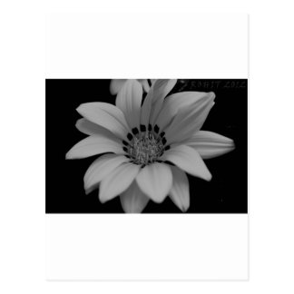 black-and-white-flower-1024x682.jpg ポストカード