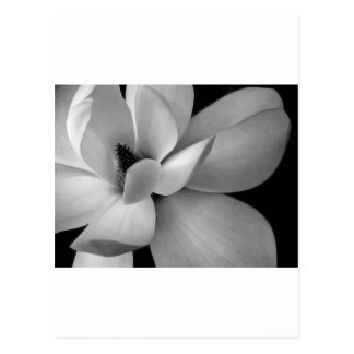 black-and-white-flower-7256-hd-wallpapers.jpg ポストカード