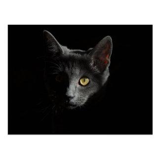 Black cat postcard ポストカード