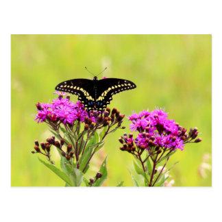 Blackswallowの尾蝶2013年のPC 2 ポストカード