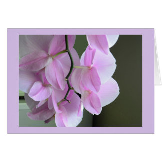 Blank Card with Pink Orchids カード