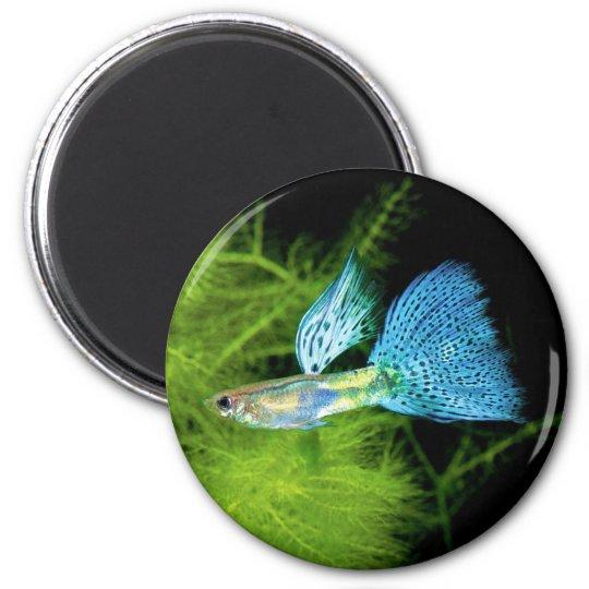 Blue Grass Guppy マグネット