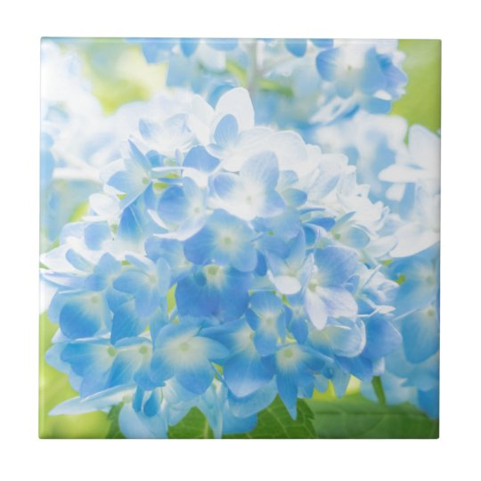 Blue Hydrangea タイル