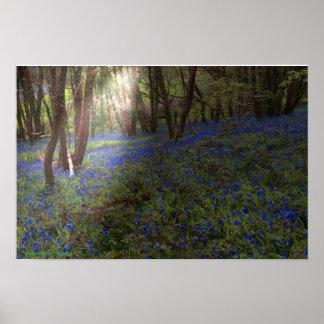 Bluebellのを突破する木製のイギリスの太陽光線 ポスター