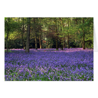 Bluebellの森、イギリス カード