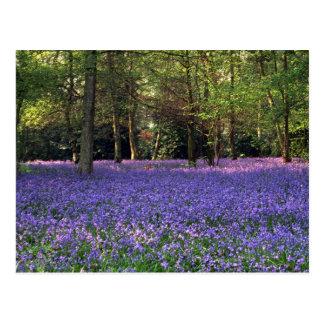 Bluebellの森、イギリス ポストカード