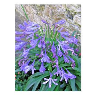 Bluebellの花 ポストカード