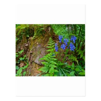 Bluebell木 ポストカード