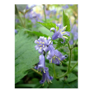 Bluebell - Trottiscliffeの国公園 ポストカード