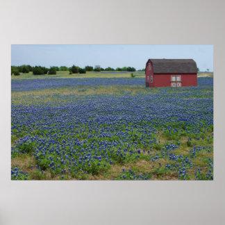 Bluebonnetsおよび赤い納屋 ポスター